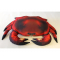 Pute Krabbe 60cm Cancer Pagurus